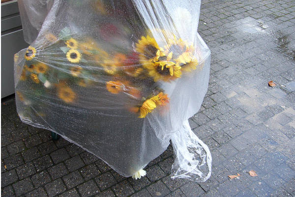 Photograph - Sunflowers Protected Against Rain by Matthias Hauser