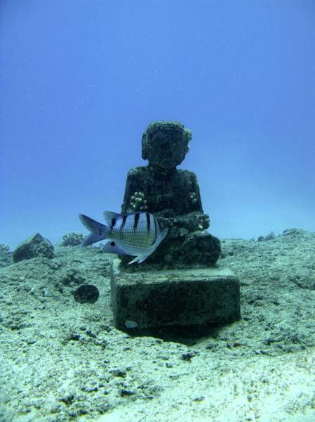 Hawaiian Fish Photograph - Sunken Statue by Michael Szoenyi/science Photo Library