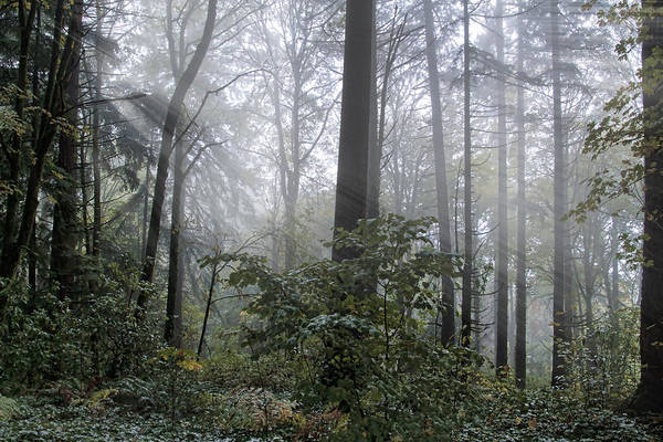 Photograph - Sunlight And Fog by Wes and Dotty Weber