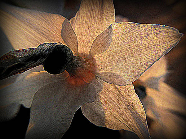 Photograph - Sunlight Becomes You by Suzy Piatt