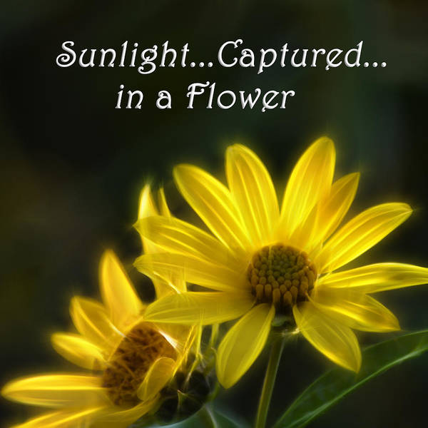 Photograph - Sunlight Captured In A Flower by Beth Sawickie