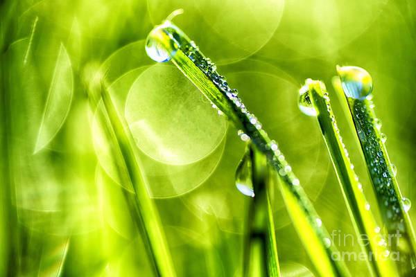 Photograph - Sunlight Dew On Grass by Thomas R Fletcher