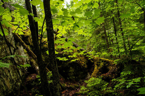 Southern Ontario Photograph - Sunlight In The Forest  by Georgia Mizuleva