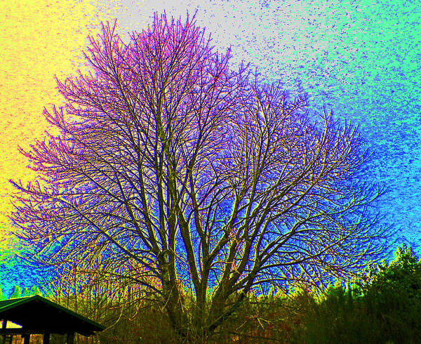 Shotwell Digital Art - Sunlight Saturation After by Seth Shotwell