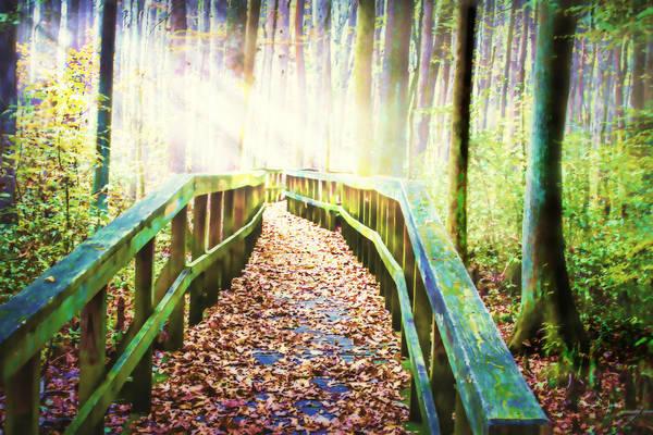 Photograph - Sunlight Serenade by Barry Jones