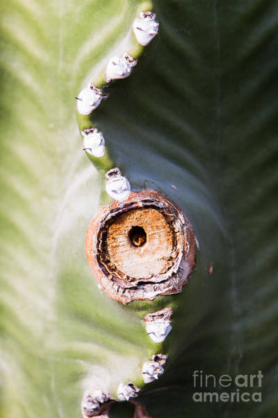 Art Print featuring the photograph Sunlight Split On Cactus Knot by John Wadleigh