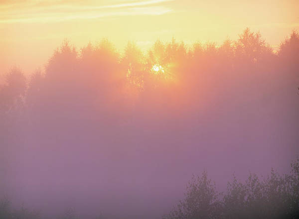 Rising Sun Photograph - Sunlight Through Fog And Trees by Bjorn Svensson/science Photo Library