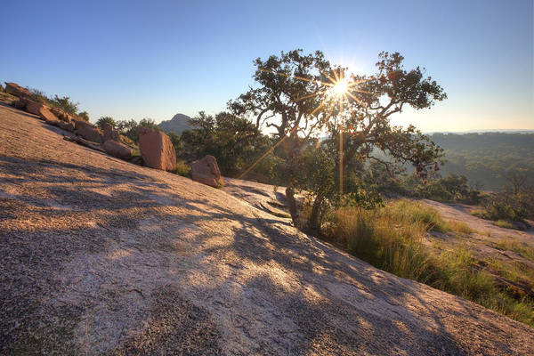 Enchanted Rock State Park Photograph - Sunlight Through Leaves At Enchanted Rock 2 by Rob Greebon
