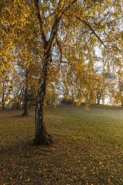 Golden Gardens Photograph - Sunlight Willow by Mike Reid