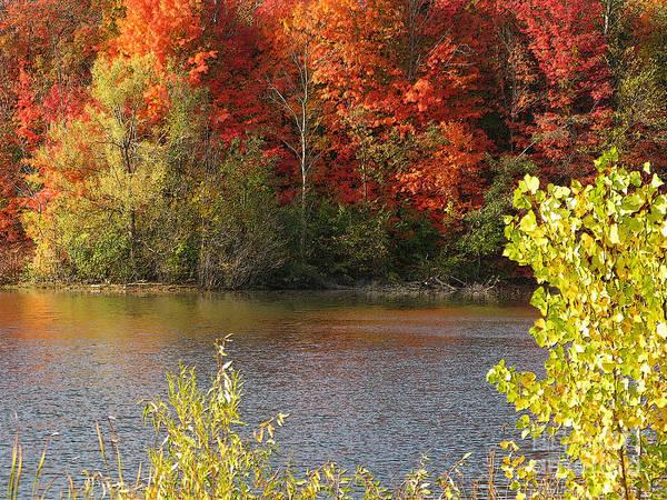 Livonia Photograph - Sunlit Autumn by Ann Horn