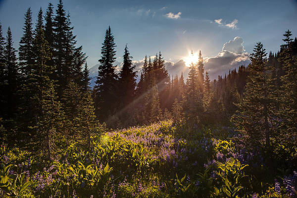 Mount Rainier Photograph - Sunlit Flower Meadows by Mike Reid