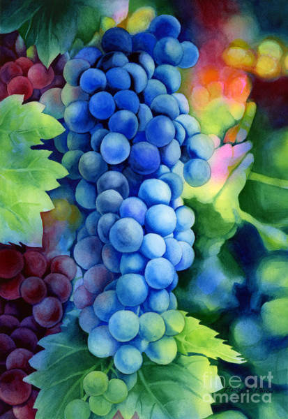 Vines Wall Art - Painting - Sunlit Grapes by Hailey E Herrera