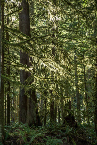 Photograph - Sunlit Green Forest by Pierre Leclerc Photography