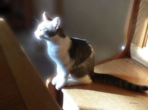 Wall Art - Photograph - Sunlit Kitty by Thomas Woolworth