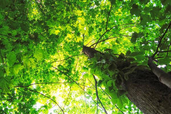 Photograph - Sunlit Leaves by Lars Lentz