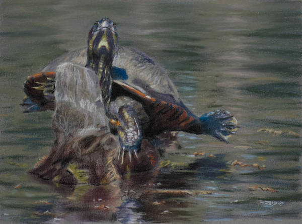 Painting - Sunnin' Turtle by Christopher Reid
