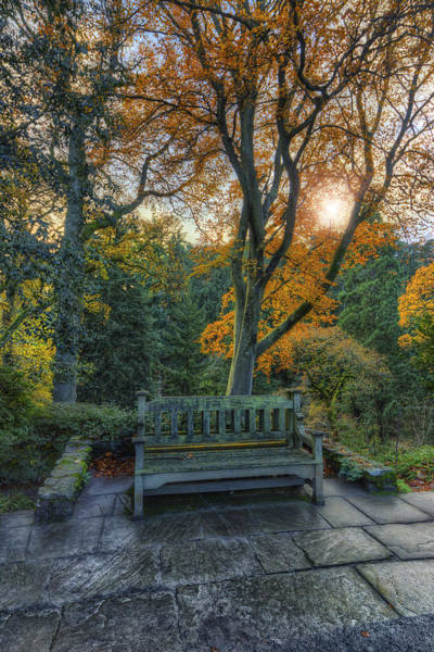 Photograph - Sunny Autumn Bench by Ian Mitchell