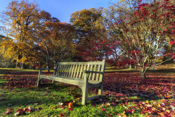 Photograph - Sunny Autumn Bench V2 by Ian Mitchell