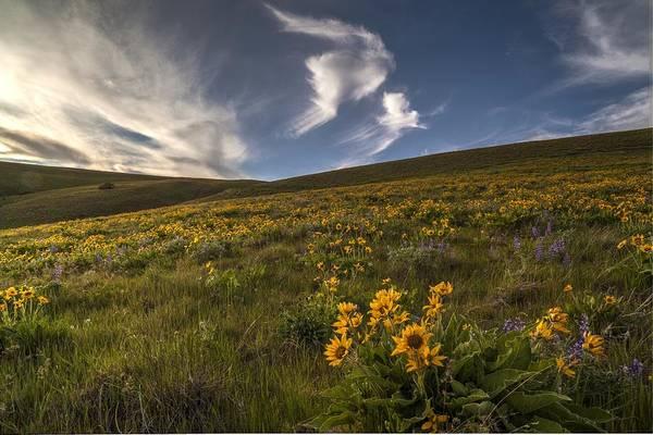 Rowena Photograph - Sunny Balsamroot Skies by Mike Reid