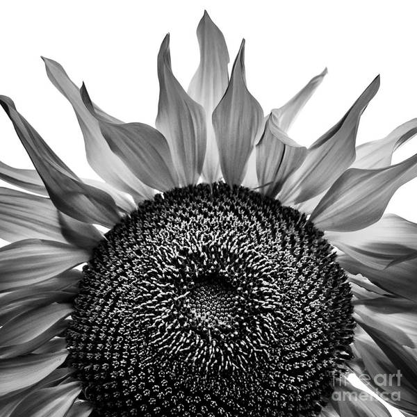 Photograph - Sunny Blue In Black And White by Michael Arend