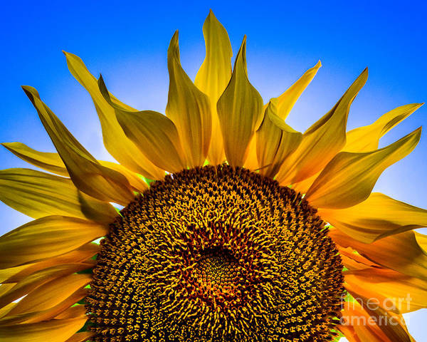 Photograph - Sunny Blue by Michael Arend