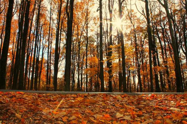 Photograph - Sunny Fall Day by Candice Trimble
