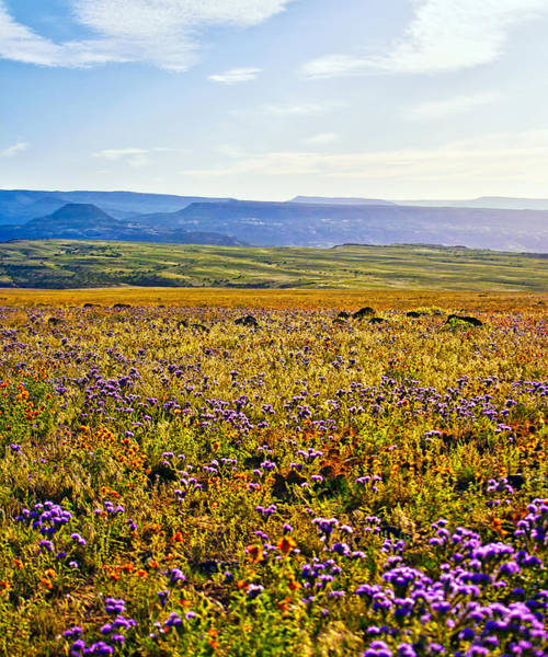 Photograph - Sunny Field Of Wildflowers by Rick Wicker