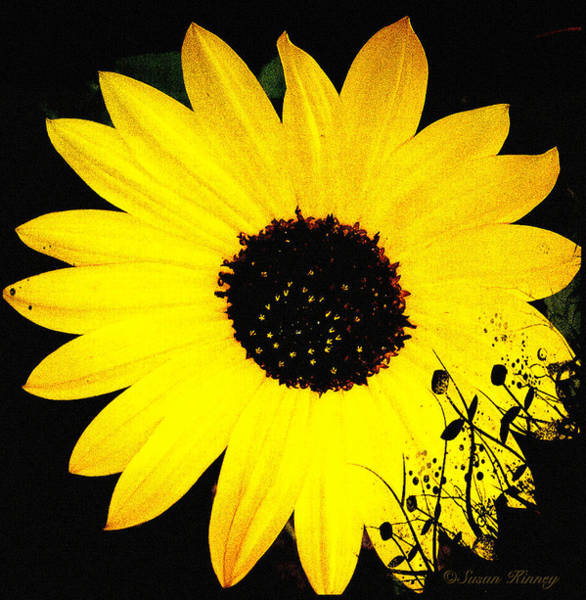 Digital Art - Sunny Flower by Susan Kinney