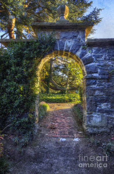 Photograph - Sunny Garden Arch by Ian Mitchell