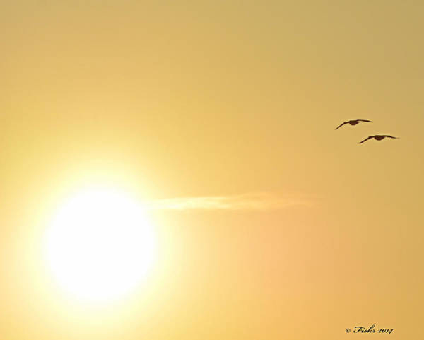 Photograph - Sunny Geese by Fiskr Larsen