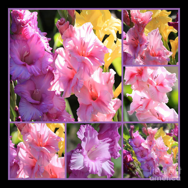 Photograph - Sunny Gladiolus In Purple Collage by Carol Groenen