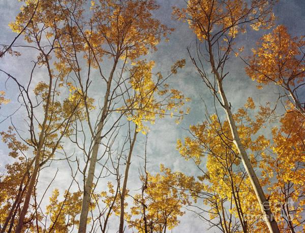 Wall Art - Photograph - Sunny Leaves Wide by Priska Wettstein