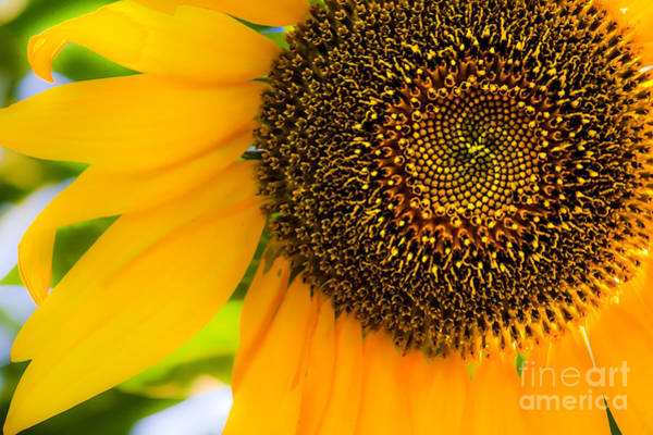 Photograph - Sunny by Michael Arend