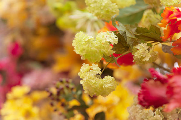 Photograph - Sunny Mood. Amsterdam Flower Market by Jenny Rainbow