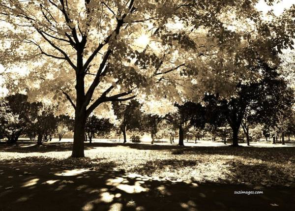 Photograph - Sunny October by Susie Loechler