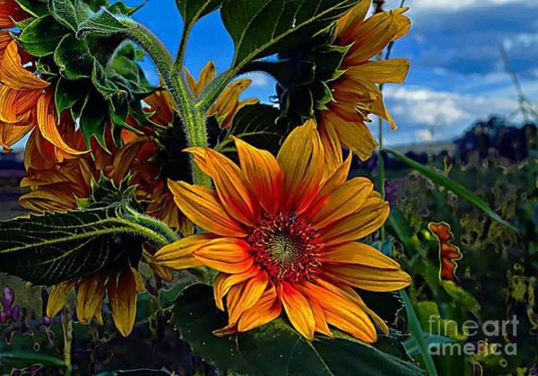 Photograph - Sunny Once So True by John  Kolenberg