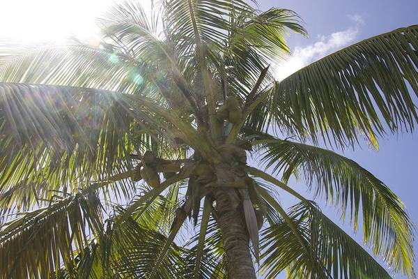 Photograph - Sunny Palm by Alice Gipson