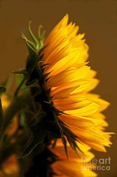 Sunny Side Up Wall Art - Photograph - Sunny Profile by Bob and Nancy Kendrick