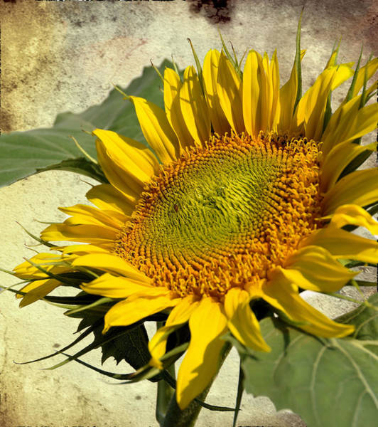 Wall Art - Photograph - Sunny Side Up by Jan Amiss Photography
