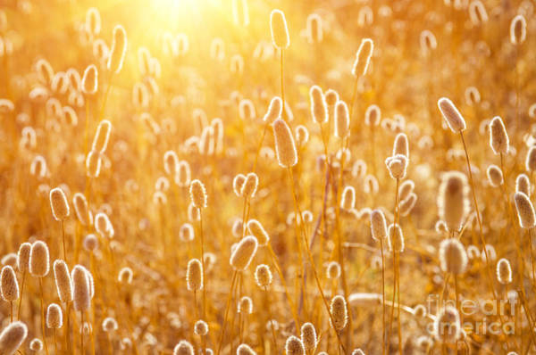 Backlit Photograph - Sunny Spikes by Carlos Caetano