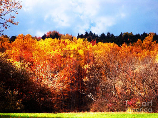 Photograph - Sunny Stormy Day At Hinckley State Park by Gena Weiser