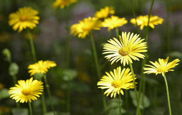 Photograph - Sunny Summer Flowers by Dreamland Media
