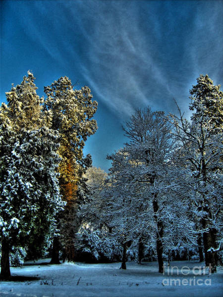 Sunny Winter Day Art Print