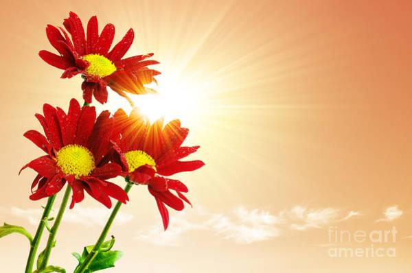 Sunny Skies Wall Art - Photograph - Sunrays Flowers by Carlos Caetano