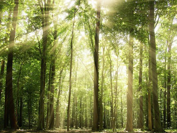 Fog Photograph - Sunrays Through Treetops by Melissa Fague