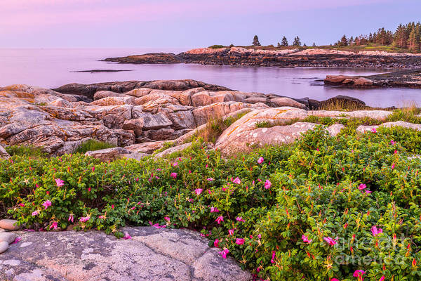 Photograph - Sunrise At Blueberry Hill In Acadia 1 by Susan Cole Kelly
