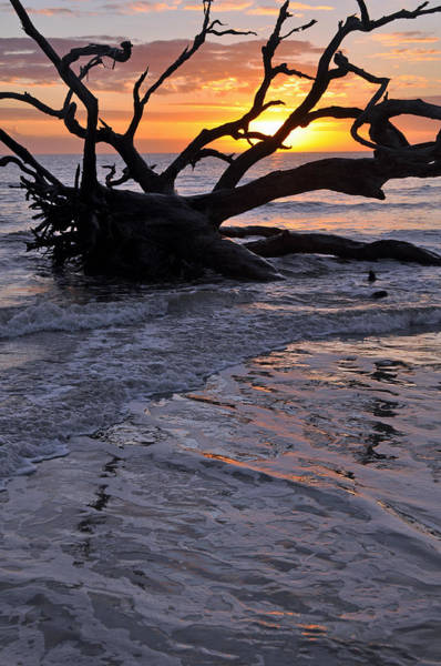 Photograph - Sunrise At Driftwood Beach 6.3 by Bruce Gourley