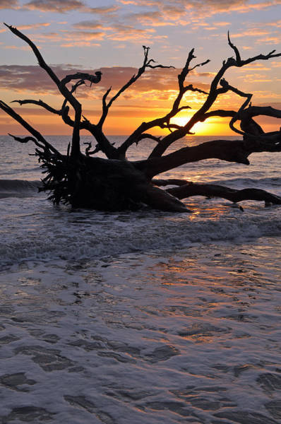 Photograph - Sunrise At Driftwood Beach 6.4 by Bruce Gourley