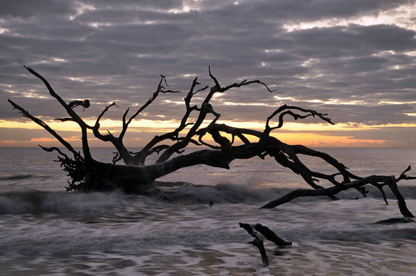 Photograph - Sunrise At Driftwood Beach 6.5 by Bruce Gourley