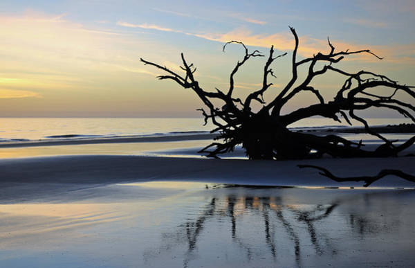 Sunrise At Driftwood Beach 6.6 Art Print